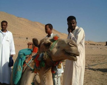 Camel_with_Nubian_men_copy_6x7.5